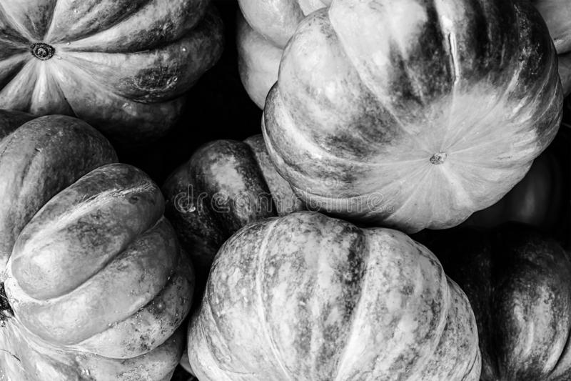 Autunno stagionale grigio del sito Web di progettazione di base delle verdure della verdura monocromatica del fondo immagine stock