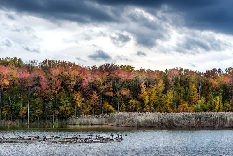 Autunno su un lago bay di Chesapeake fotografia stock libera da diritti