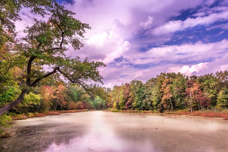 Autunno su uno stagno della baia di Chesapeake immagini stock libere da diritti