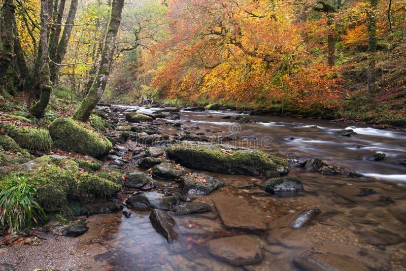 Autunno sul barle Somerset Regno Unito del fiume fotografie stock