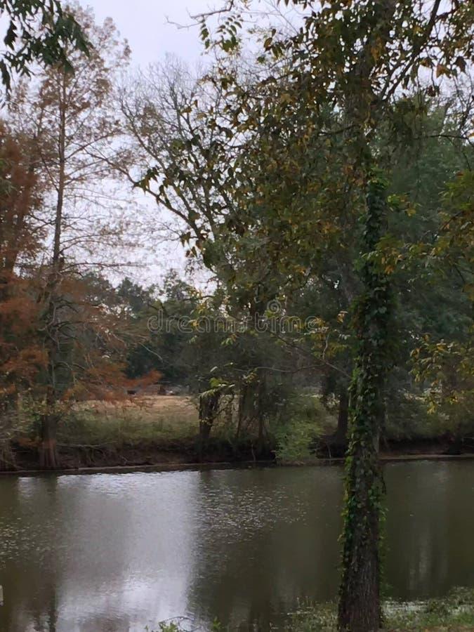 Autunno sul ramo paludoso di fiume immagini stock