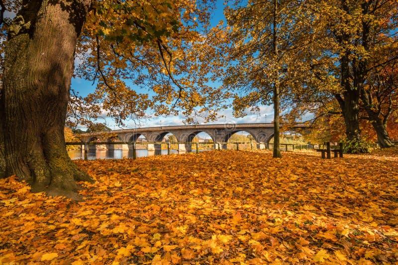 Autunno a Tyne Green Riverside Park immagini stock libere da diritti