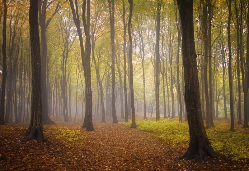 Autunno in una foresta con nebbia fotografia stock libera da diritti