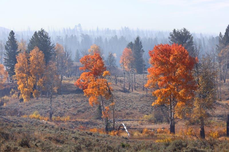 Autunno in Yellowstone immagine stock