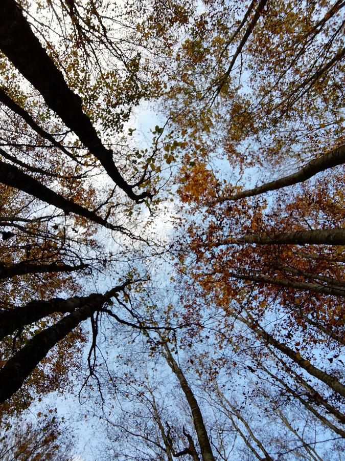 Autum. In the forest royalty free stock image