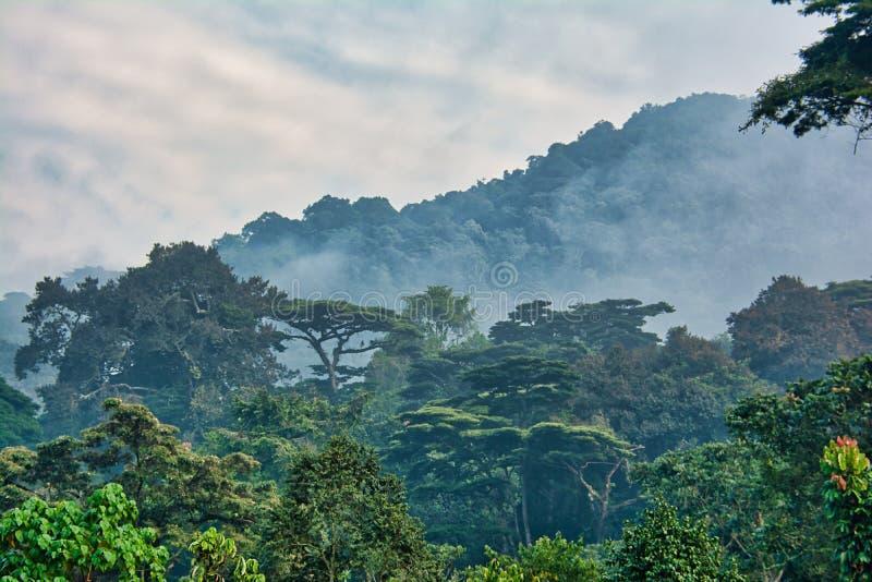 Auvent de forêt tropicale avec la brume de matin en parc national impénétrable de Bwindi image libre de droits