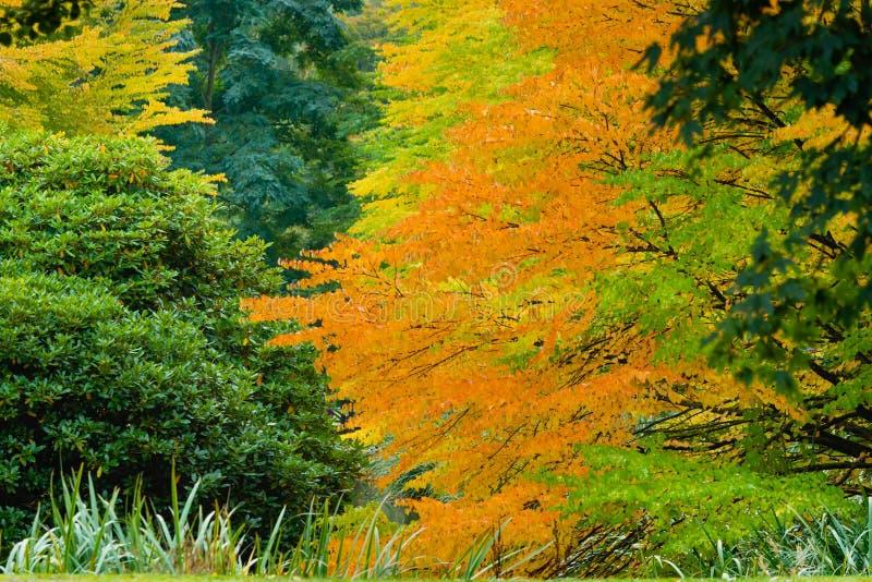 Auvent orange de chute photo stock
