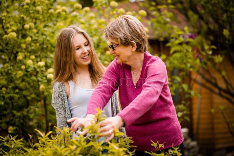 A avó ensina a poda do neto fotografia de stock royalty free
