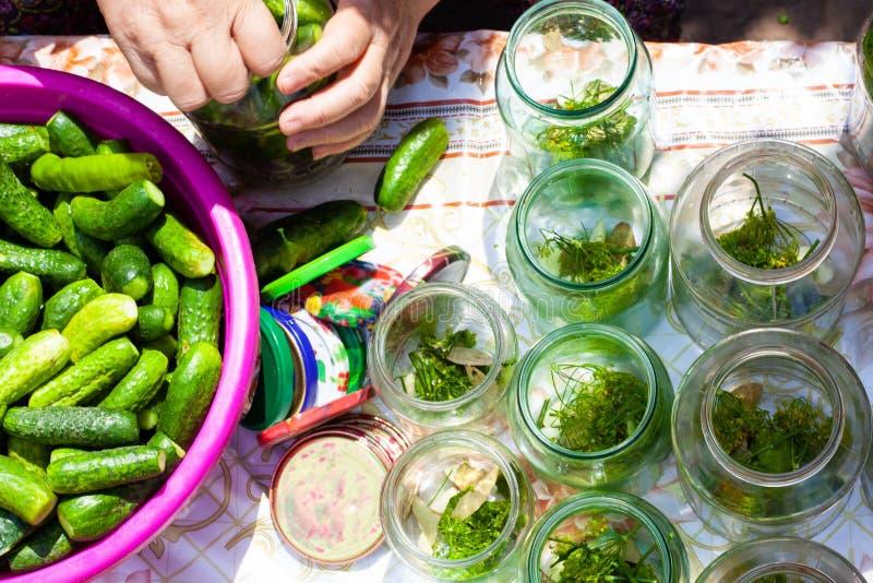 A avó fecha pepinos conservados nos bancos para o inverno, o processo de conservar pepinos frescos pequenos no frasco foto de stock royalty free