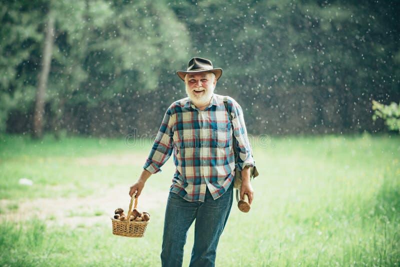 Avô com cesta dos cogumelos e de uma expressão facial surpreendida Ca?a do cogumelo Mushroomer farpado velho dentro foto de stock royalty free
