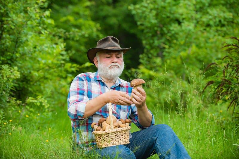 Avô feliz com os cogumelos no busket que caça o cogumelo Pensionista com cesta dos cogumelos e de um facial surpreendido fotos de stock royalty free