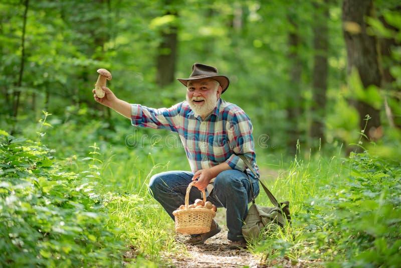 Avô feliz - verão e passatempos Passeio do homem idoso Pensionista do vov? Caminhada superior na floresta que recolhe cogumelos fotos de stock