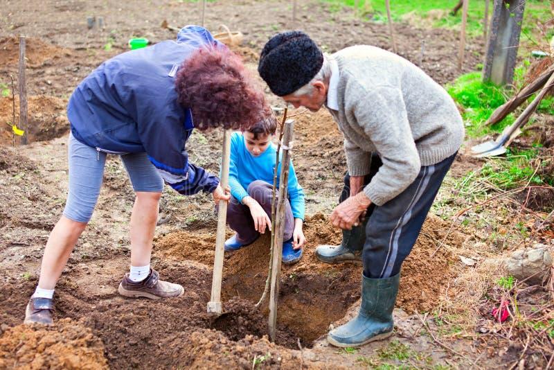 Avô, filha e neto plantando árvores imagem de stock royalty free