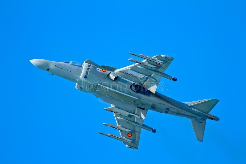AV--8Bengelsk harhund plus royaltyfria bilder