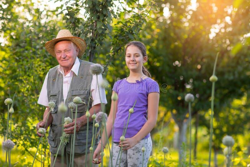 Avô com sua neta no jardim vegetal fotografia de stock