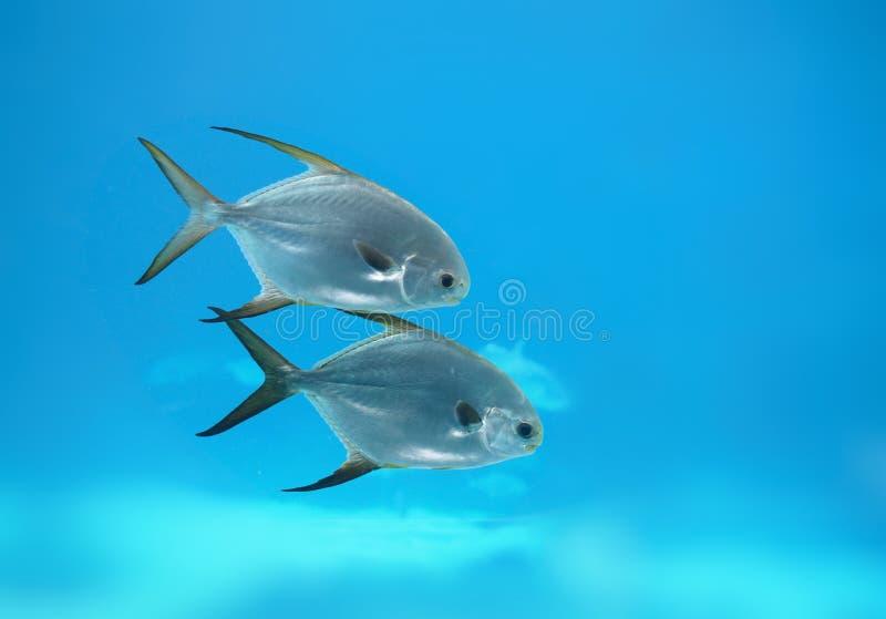 2 av en sort under havet arkivbild