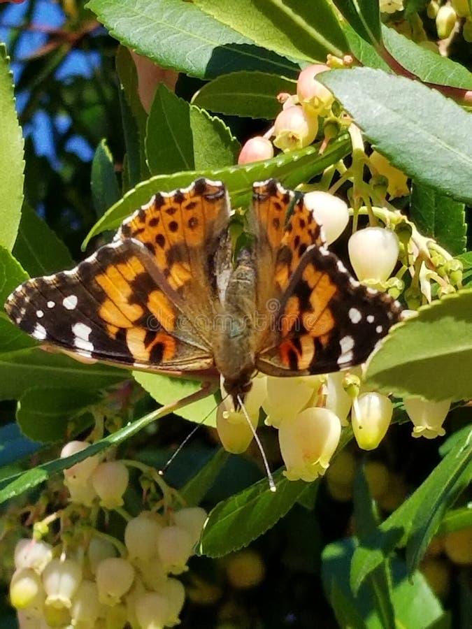 av vingar och blommor royaltyfri fotografi