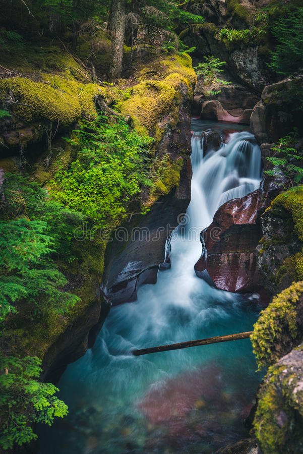 Free Avalanche Creek Waterfall. [Portrait] Glacier National Park, Montana, USA Stock Photo - 81857310