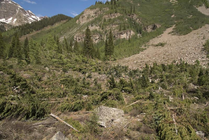 Avalanche Damage - Crater Lake Trail stock image