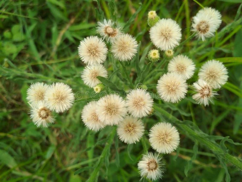 Avalant le bordel une belle fleur photos stock