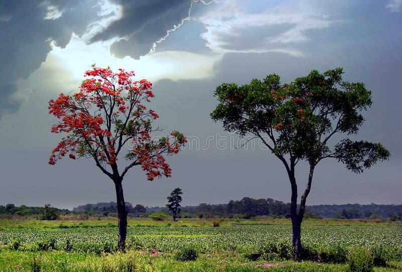 Avant la tempête images libres de droits
