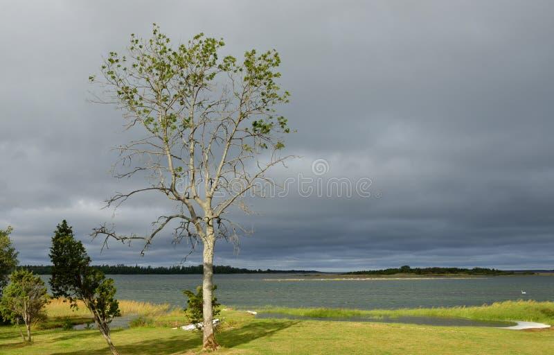 Download Avant tempête image stock. Image du vert, orageux, storm - 45351091