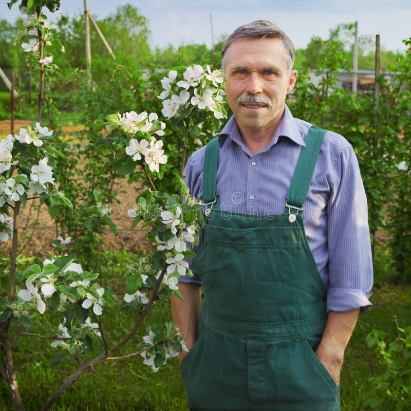 Avanzado del hombre en años en jardín de la primavera foto de archivo