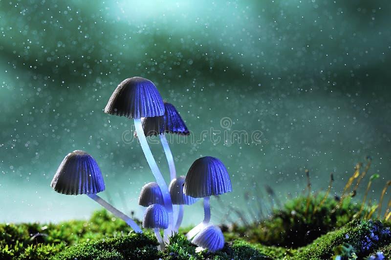 Download Avatar mushroom lamp stock image. Image of mushroom, blue - 25418521