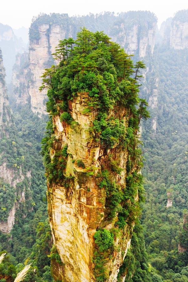 Avatarhallelujaberget bland gröna trän och vaggar royaltyfri foto