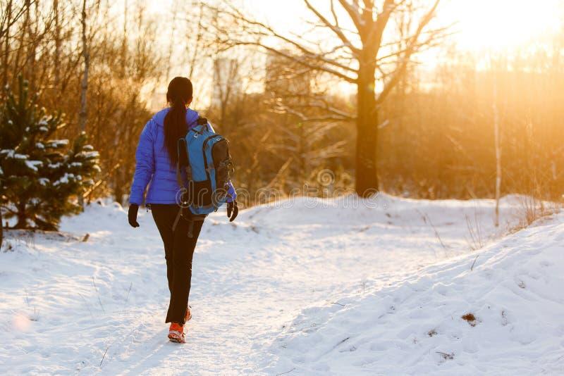 Avbilda från baksida av att gå sportkvinnan med ryggsäcken i vinterskog royaltyfria bilder