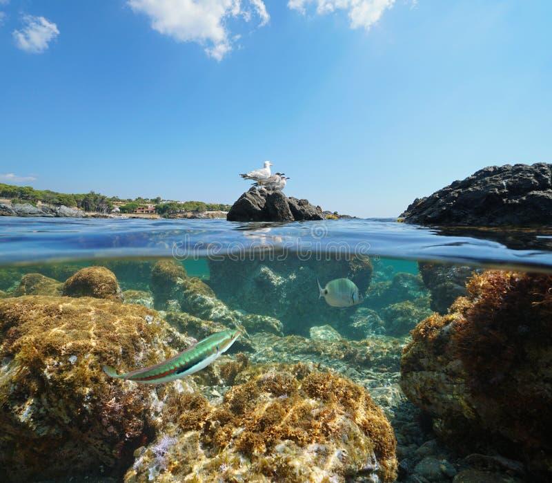 Ave marinho da Espanha no mar subaquático da rocha e dos peixes foto de stock royalty free