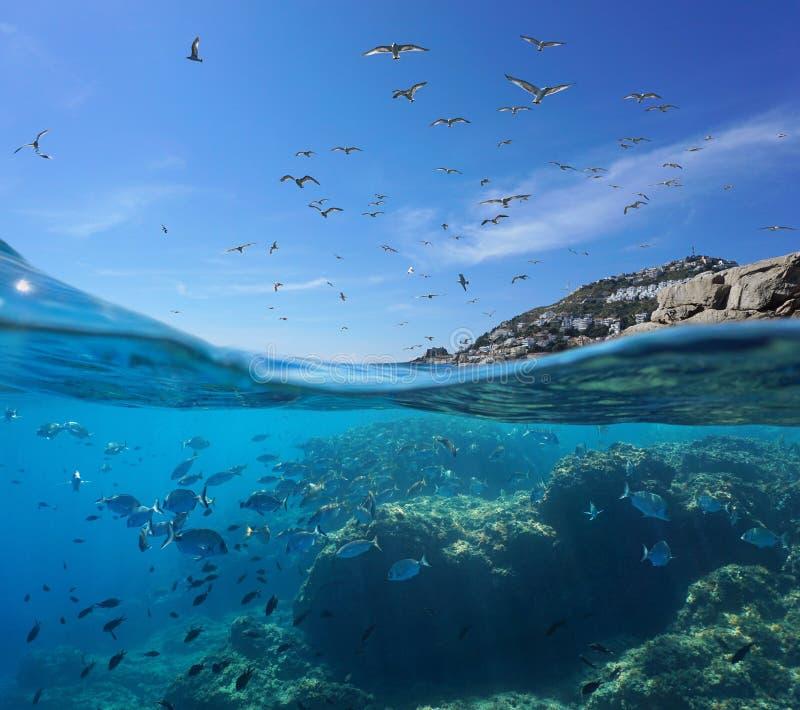 Ave marinho no céu e banco de areia dos peixes subaquáticos imagens de stock royalty free