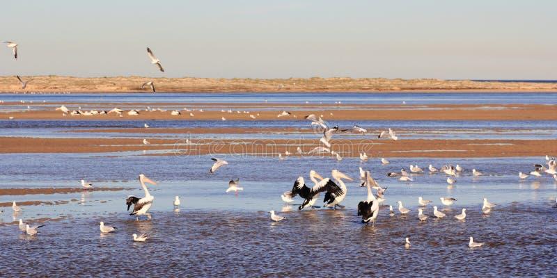 Ave marinho no lago litoral fotos de stock
