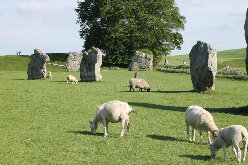 Avebury pozyci cakle i kamienie fotografia royalty free