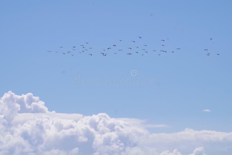 Avefrías y nubes sobre el brazo de mar de adelante imágenes de archivo libres de regalías