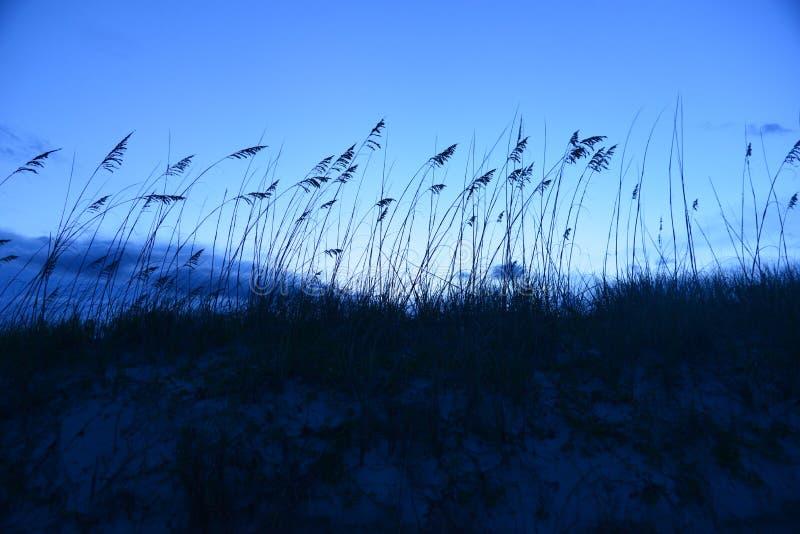 A aveia do mar acena enquanto o sol termina seu curso diário foto de stock