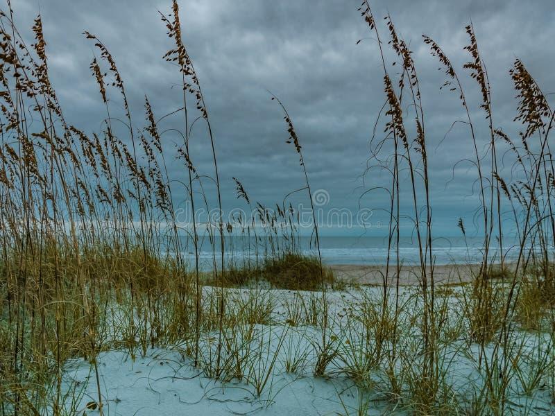 Aveia do mar e dunas de areia em Amelia Island fotografia de stock
