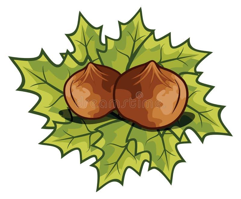 Avellanas Nuts - avellana libre illustration