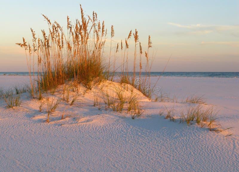 Avena, arena y puesta del sol del mar en la costa del golfo imagen de archivo libre de regalías