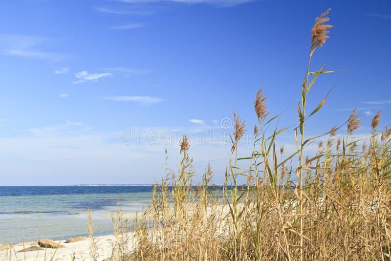 Avena del mar y cielo azul