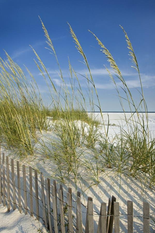 Avena del mare e rete fissa della duna immagini stock libere da diritti