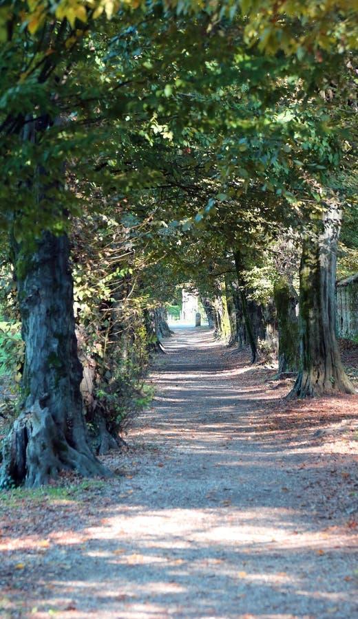 Avenida arbolada de un parque público con los árboles en el otoño fotografía de archivo libre de regalías