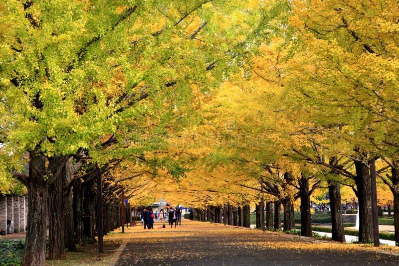 Avenida bonita da nogueira-do-Japão no Tóquio fotos de stock royalty free