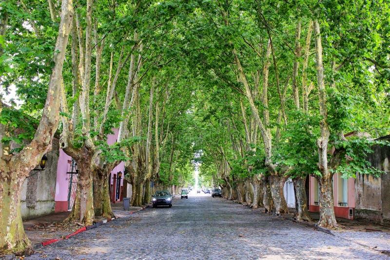 Avenida com as árvores do sicômoro no del Sacramento de Colonia, Uruguai imagens de stock
