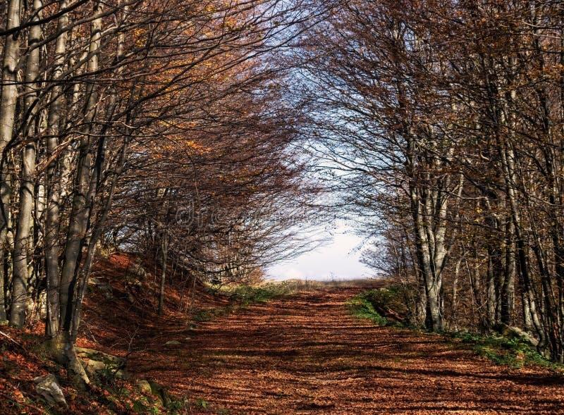 Avenida das árvores do outono no Parque do Parco dei Cento Laghi ie, em 100 Lagos, Itália, nas montanhas Apenninas, perto foto de stock