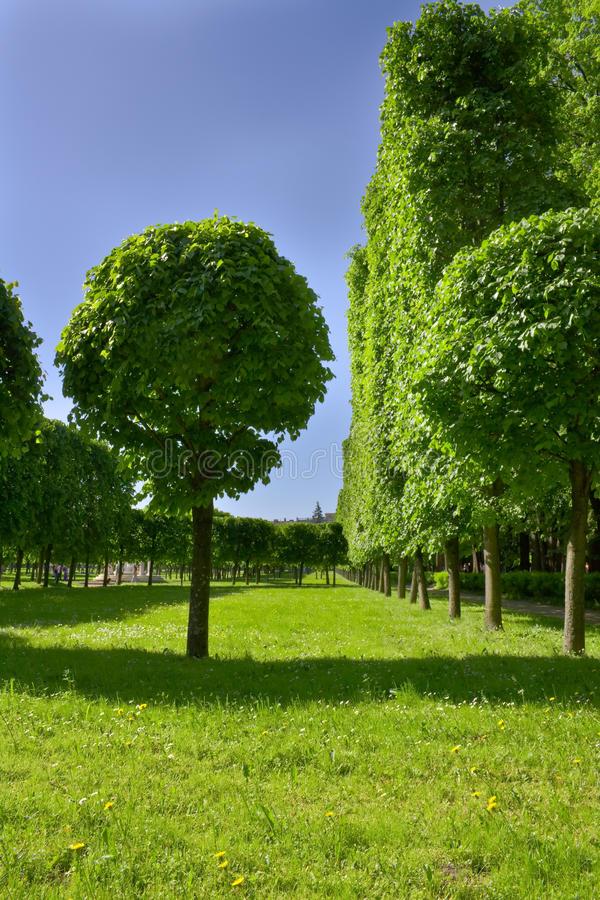 Avenida das árvores no parque well-groomed. fotos de stock