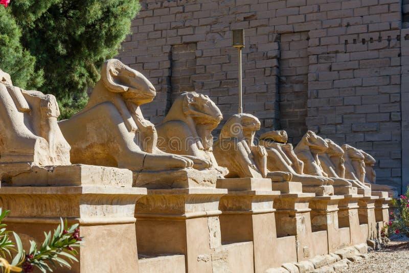 Avenida das esfinges RAM-dirigidas em um templo de Karnak Luxor, Egipto imagem de stock royalty free