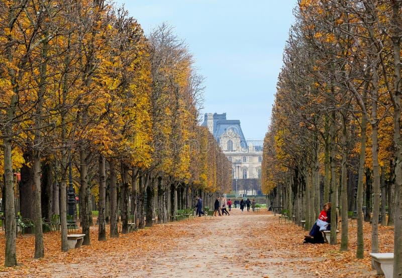 Avenida de árboles en el otoño que lleva al Musee du Louvre en París Francia fotografía de archivo