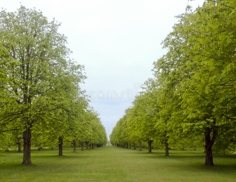 Avenida de árboles en resorte imágenes de archivo libres de regalías