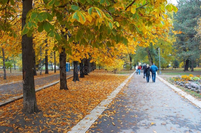 Avenida de parque do outono foto de stock royalty free